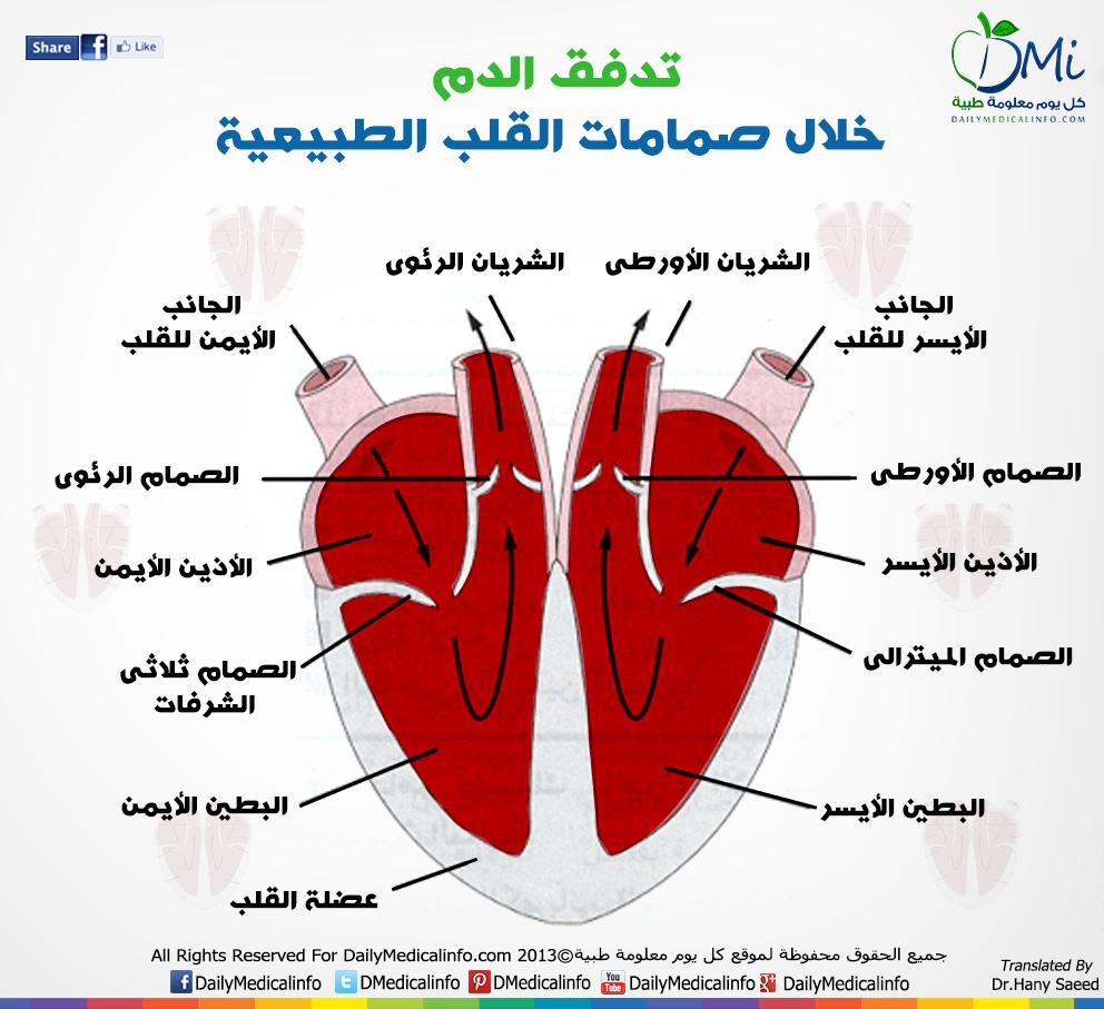 DailyMedicalinfo Heart Valves
