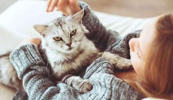 اضرار تربية القطط