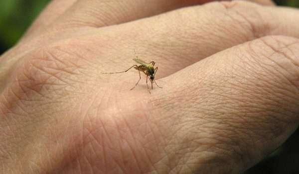 الملاريا ... كل ما تود معرفته عنها وعن أسبابها وطرق انتشارها - كل يوم معلومة طبية