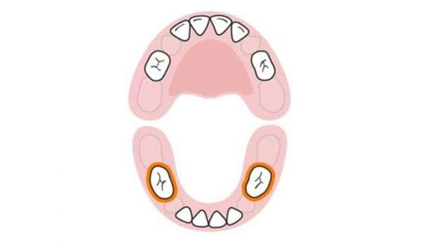 اسنان عند الاطفال الضرسان الأماميان السفليان