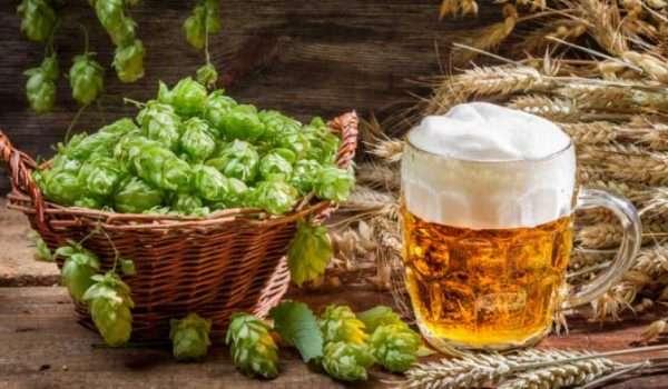 فوائد مشروب الشعير