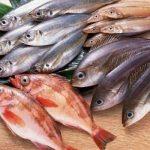 السمك الطازج والسمك الفاسد
