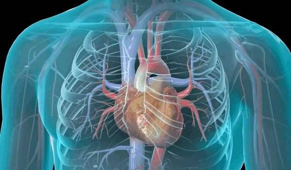 امراض القلب : كيف تتابع حالتك الصحية يوميا ؟