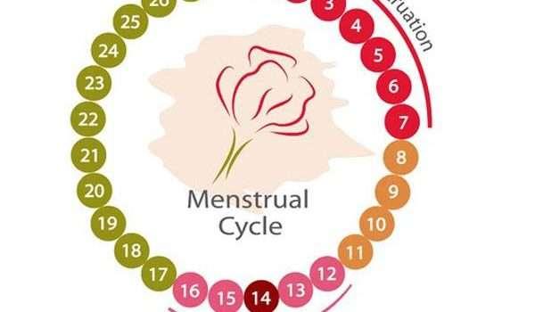 الدورة الشهرية والجماع