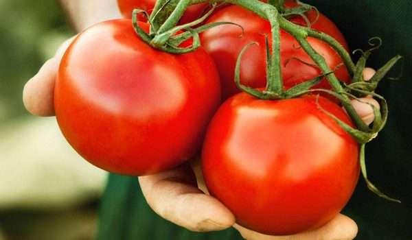 الطماطم والرجيم