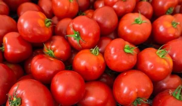 اضرار الطماطم على الكلى عند مرضى الكلى عند الإفراط في تناولها
