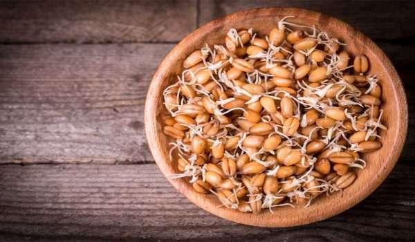 فوائد جنين القمح للاطفال