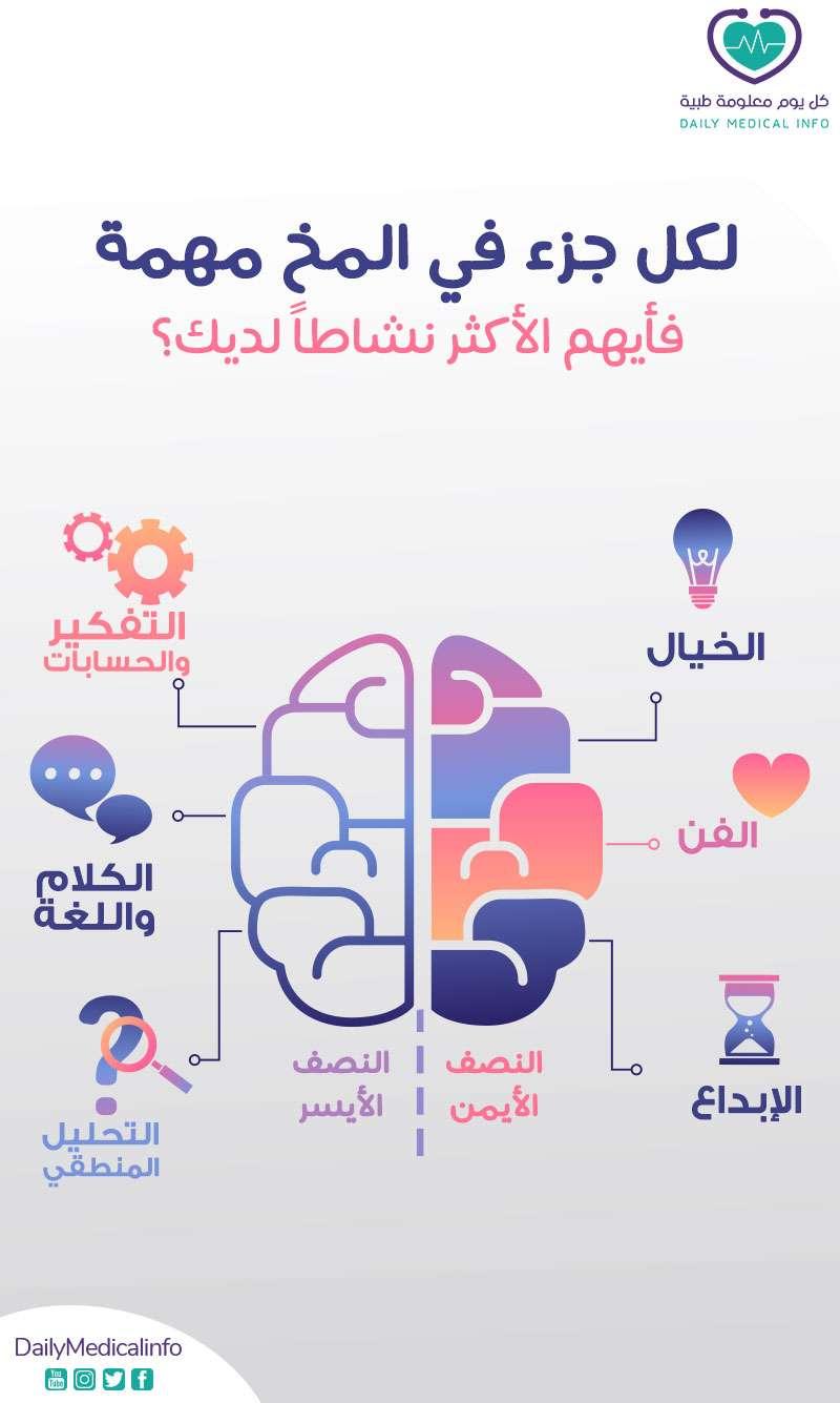 أجزاء المخ